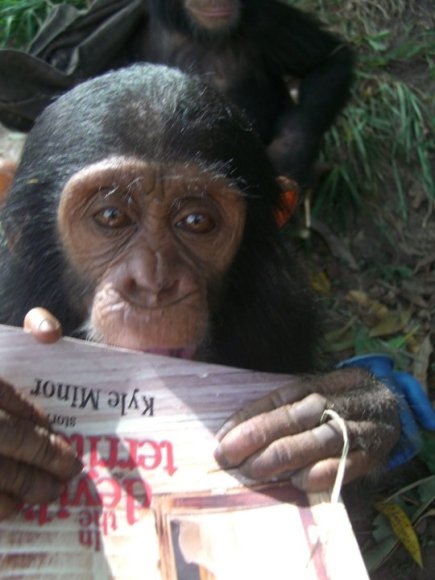 chimpdevil