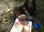 chimpdevil3